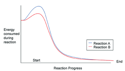 This figure is a graph. The y-axis is labeled energy consumed during reaction. The y-axis is labeled reaction progress. The left end of the x-axis is labeled start, while the right end is labeled end. There are two plot lines on the graph. The blue plot line is labeled reaction A. The red plot line is labeled reaction B. Both reaction A and reaction B reaction start about three quarters of the way up the y-axis. The blue plot line increases sharply at the start of the reaction, peaking at the top of the y-axis. Reaction A then quickly dives down toward the x-axis about halfway through the reaction, after which it levels out until the end of the reaction. Reaction B has the same shape plot line as reaction A. The main difference is that reaction Bs plot line has a significantly lower peak at the start of reaction.