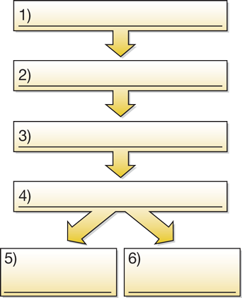 Graphical organizer